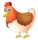 poule_fb