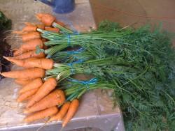 bottes carottes orange