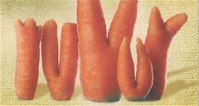 carottes tordues